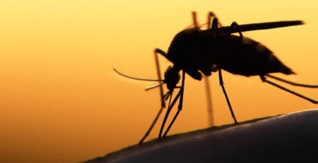 L'importanza sanitaria delle zanzare