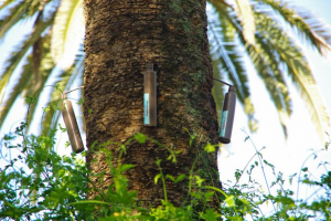 endoterapia piante arboree