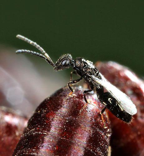 Lotta biologica per il controllo delle mosche