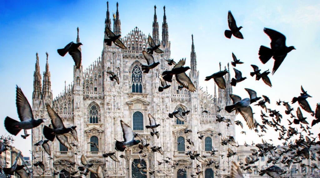 Infestazioni da piccioni