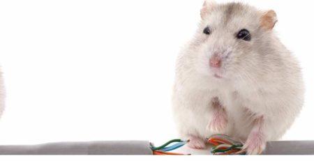 fili elettrici e cavi rat-proofing-1